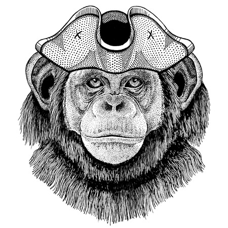 Chimpanzee, Monkey wearing pirate tricorn hat. Capitan costume. Illusztráció