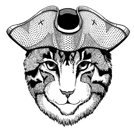 Cat wearing pirate tricorn hat. Capitan costume.