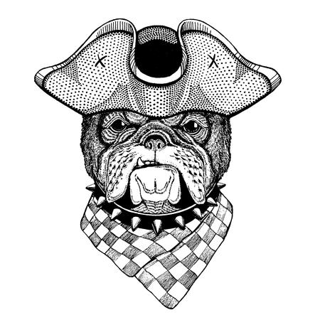 Dog, bulldog wearing pirate tricorn hat. Capitan costume. Illustration
