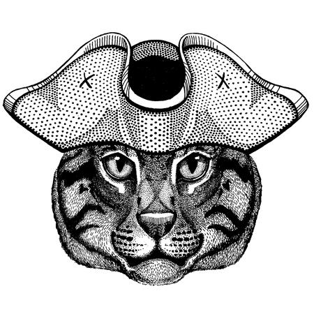 Fishing cat wearing pirate tricorn hat. Capitan costume. Illusztráció