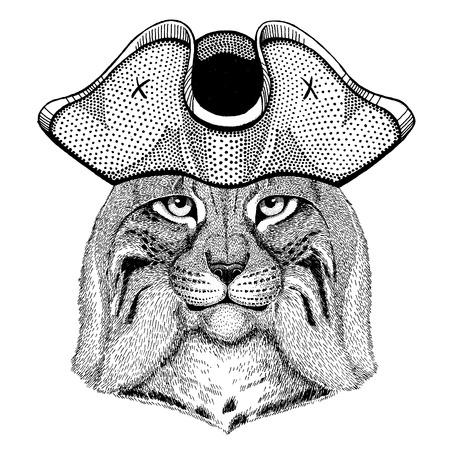 Wild cat, Lynx, Bobcat, Trot wearing pirate tricorn hat. Capitan costume.