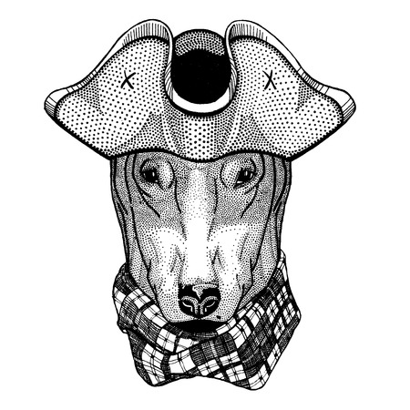 Dog wearing pirate tricorn hat. Capitan costume. Ilustrace