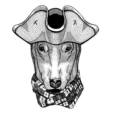 Dog wearing pirate tricorn hat. Capitan costume. Illustration