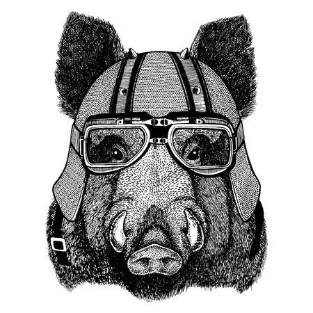 wild boar wearing a motorcycle, aero helmet.