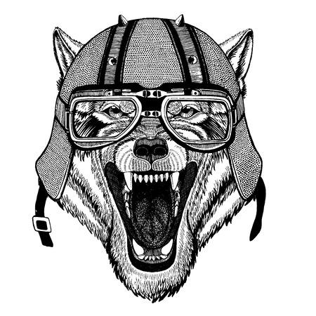 Wolf, dog wearing a motorcycle, aero helmet.