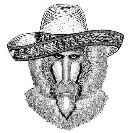 Monkey, baboon, dog-ape, ape wearing traditional mexican hat. Classic headdress, fiesta, party.