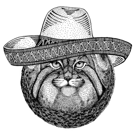Manul, wild cat wearing traditional mexican hat. Classic headdress, fiesta, party. Illustration