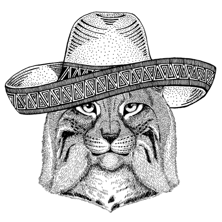 Wild cat, Lynx, Bobcat, Trot wearing traditional mexican hat. Classic headdress, fiesta, party. Illustration