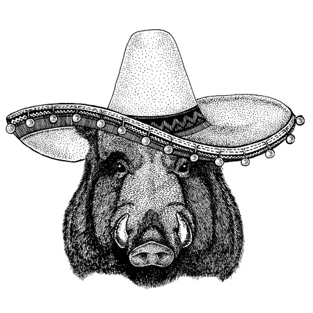 Aper, boar, hog, wild boar wearing traditional mexican hat. Classic headdress, fiesta, party.