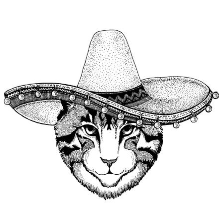 Gato con sombrero tradicional mexicano. Tocado clásico, fiesta, fiesta.