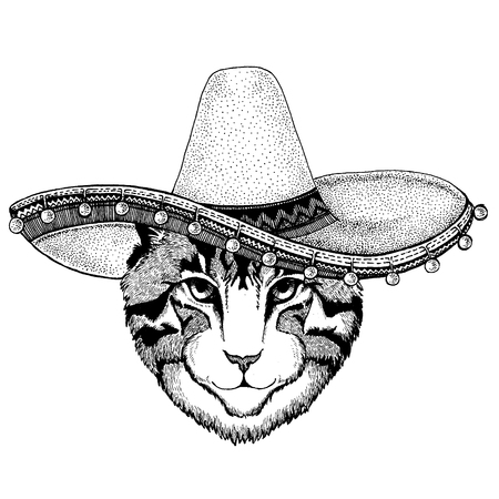 Cat wearing traditional mexican hat. Classic headdress, fiesta, party. Illustration