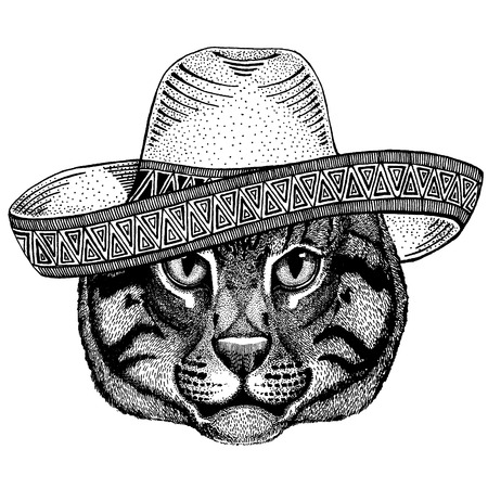 Cat wearing traditional mexican hat. Classic headdress, fiesta, party. Vectores