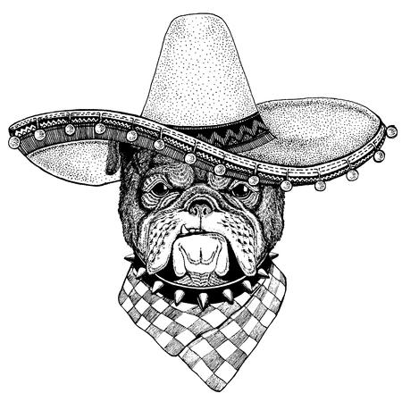 Bulldog, perro con sombrero tradicional mexicano. Tocado clásico, fiesta, fiesta.