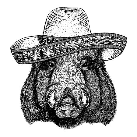 Aper, boar, hog, wild boar wearing traditional mexican hat. Classic headdress, fiesta, party.