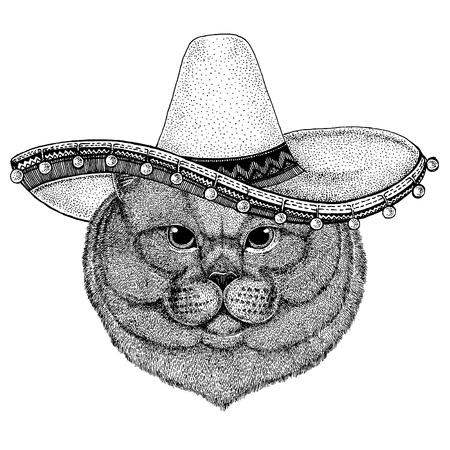 Gato británico con sombrero mexicano tradicional. Tocado clásico, fiesta, fiesta. Ilustración de vector