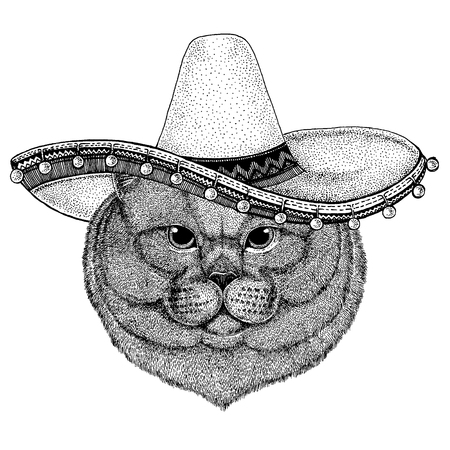 British cat wearing traditional mexican hat. Classic headdress, fiesta, party.