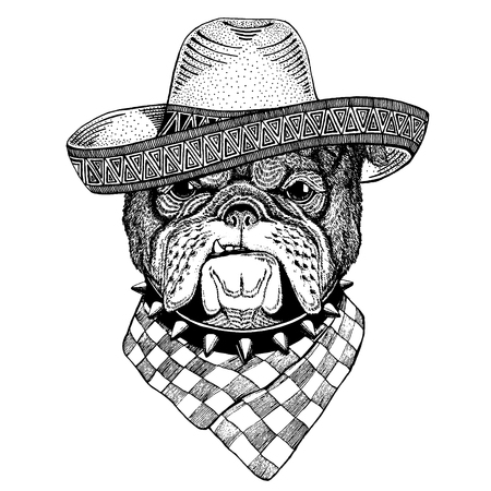 Bulldog, dog wearing traditional mexican hat. Classic headdress, fiesta, party.