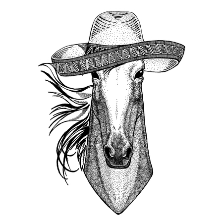 Horse, hoss, knight, steed, courser wearing traditional mexican hat. Classic headdress, fiesta, party.