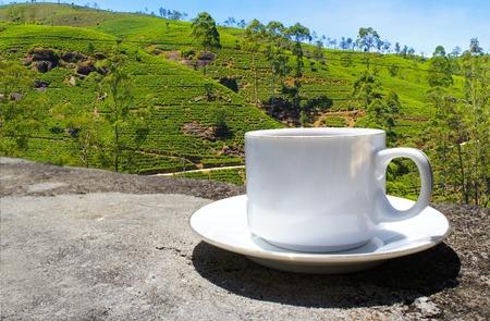 Les collines de thé du Sri Lanka. Plantation de thé. Tasse de thé.