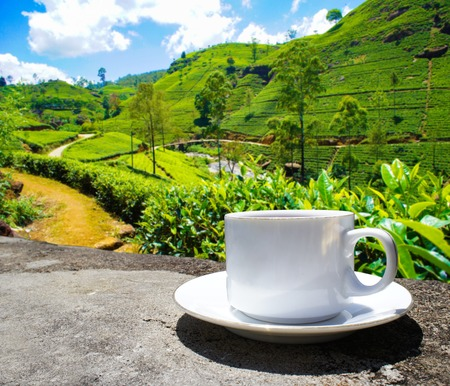 Sri Lanka tea hills. Tea plantation. Cup of tea.