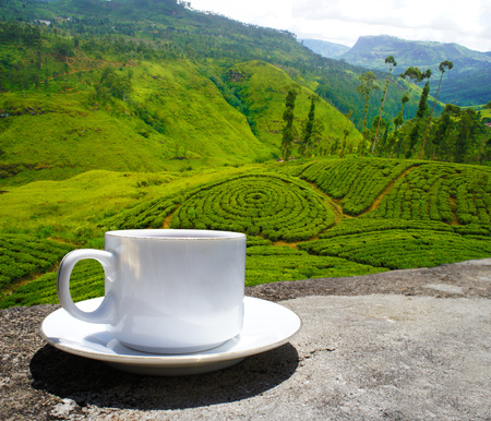 Sri Lanka tea hills. Tea cup and plantation. 写真素材