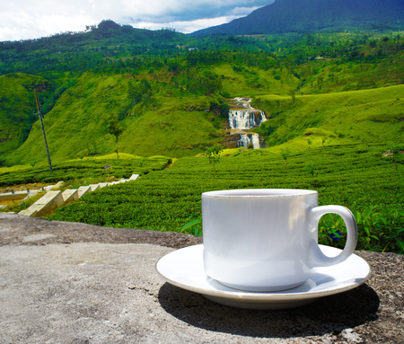 Sri Lanka tea hills. Tea cup and plantation. Stock Photo