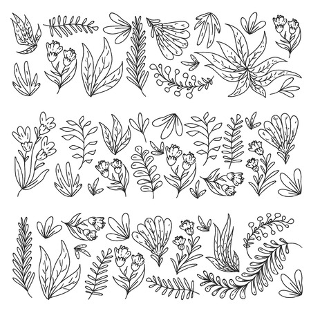 Hand vector drawn floral, leaves elements. Pattern for logo, greeting card, wedding design