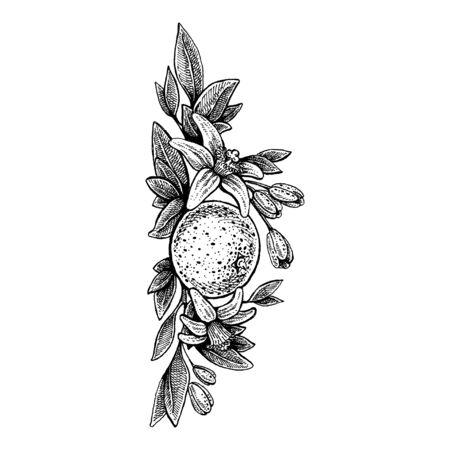 Plantilla de invitación de boda, concepto de egología, comida vegana, cafetería, restaurante, ilustración para paquete de jugo de naranja Ilustración de vector