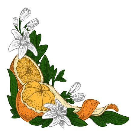 Flowers and oranges. Vector picture. Wedding invitation template, harvest festival, egology concept, vegan food, cafe, restaurant, illustration for orange juice package Иллюстрация