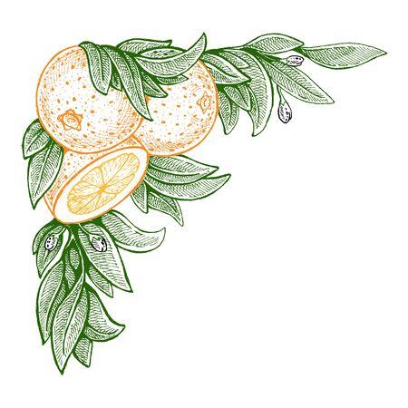 Wedding invitation template, egology concept, vegan food, cafe, restaurant, illustration for orange juice package Фото со стока - 131246024