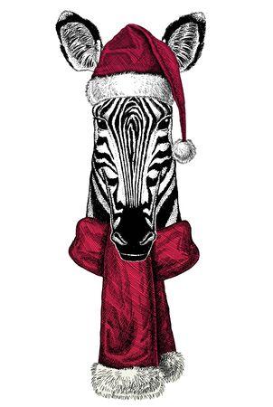 Portrait of zebra wearing Chrismtas Santa Claus hat Foto de archivo - 132114731