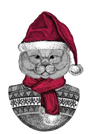 Portrait of British Shorthair cat, Scottish Fold cat wearing Chrismtas Santa Claus hat Foto de archivo - 132114751