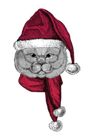 Portrait of British Shorthair cat, Scottish Fold cat wearing Chrismtas Santa Claus hat Foto de archivo - 132114560