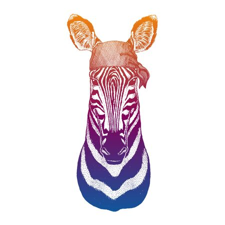 Zebra. Wild pirate or biker. Vector animal portrait. Sailor, motorcyclist. Print for children clothing, tee. Kids fashion. Stock Illustratie