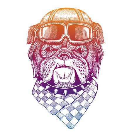 Bulldog, dog wearing vintage aviator leather helmet. Image in retro style. Flying club or motorcycle biker emblem.