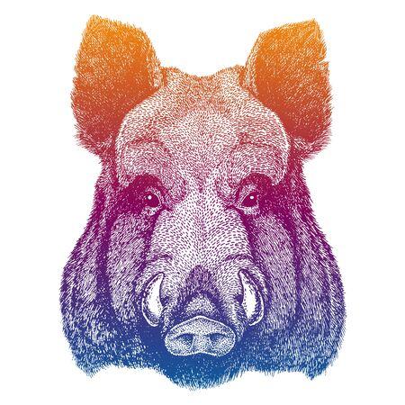 head of a wild boar Stock fotó - 136982878