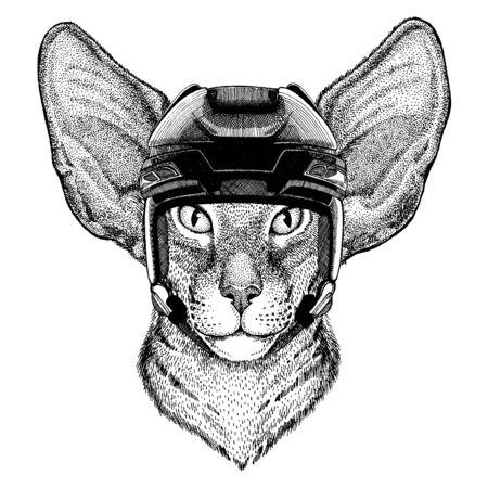 Cat, animal wearing hockey helmet. Hand drawn image of lion for tattoo, t-shirt, emblem, badge, logo, patch.
