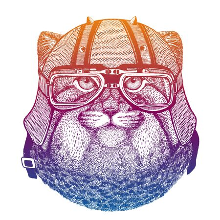 Pallas cat, manul, wild cat. Speed and road. Vintage style vector illustration. Face of dangerous wild animal. Portrait head of biker.