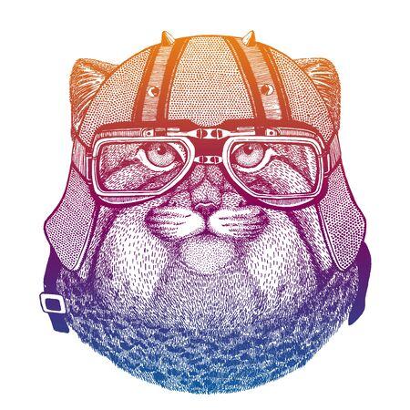Pallas gato, manul, gato montés. Velocidad y carretera. Ilustración de vector de estilo vintage. Cara de peligroso animal salvaje. Retrato de cabeza de motorista. Ilustración de vector