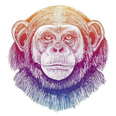 Chimpanzee, monkey. Hand drawn illustration for tattoo, emblem, badge, patch t-shirt. Ilustracja