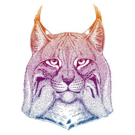 Wild cat, Lynx, Bobcat, Trot Zdjęcie Seryjne - 140167805