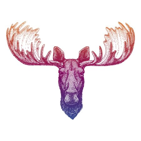 Moose, elk. Hand drawn animal portrait for tattoo, tee, emblem, badge, patch