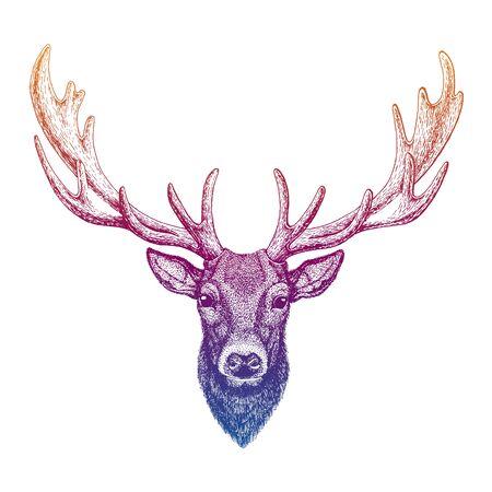 Deer. Hand drawn animal portrait for tattoo, tee, emblem, badge, patch