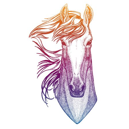 Portrait of horse. Vector animal head. Symbol of sport cometition, farm, exhibition.