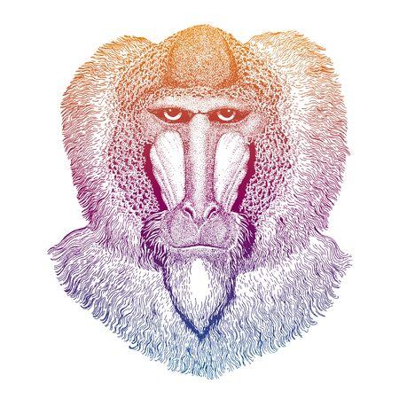 Baboon, ape, monkey. Hand drawn illustration for tattoo, emblem, badge, patch t-shirt. Ilustracja