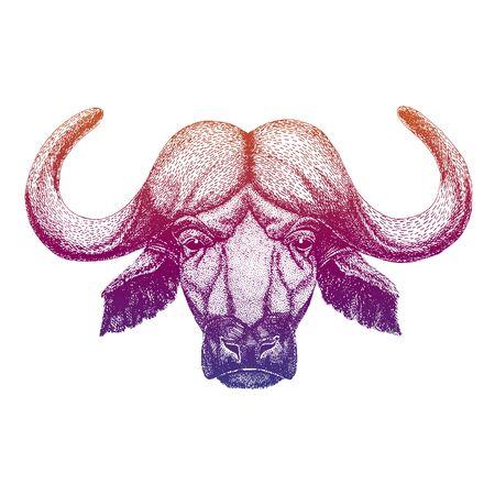 Buffalo, bull, ox. Hand drawn illustration for tattoo, emblem, badge, patch, t-shirt Zdjęcie Seryjne - 140167814