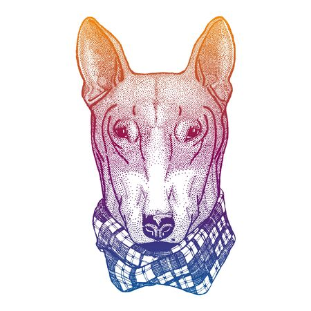 Dog, pitbull. Animal portrait for tee, nursery posters. Hand drawn image for tattoo, t-shirt, emblem, badge, patch.