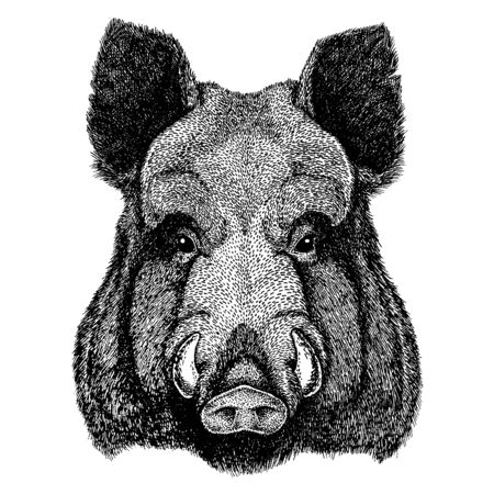 Aper, boar, hog, wild boar. Wild animal for tattoo, nursery poster, children tee, clothing, posters, emblem, badge, patch.