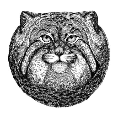 Wild cat. Manul. Wild animal for tattoo, nursery poster, children tee, clothing, posters, emblem, badge, patch