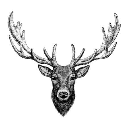 Deer. Wild animal for tattoo, nursery poster, children tee, clothing, posters, emblem, badge, patch